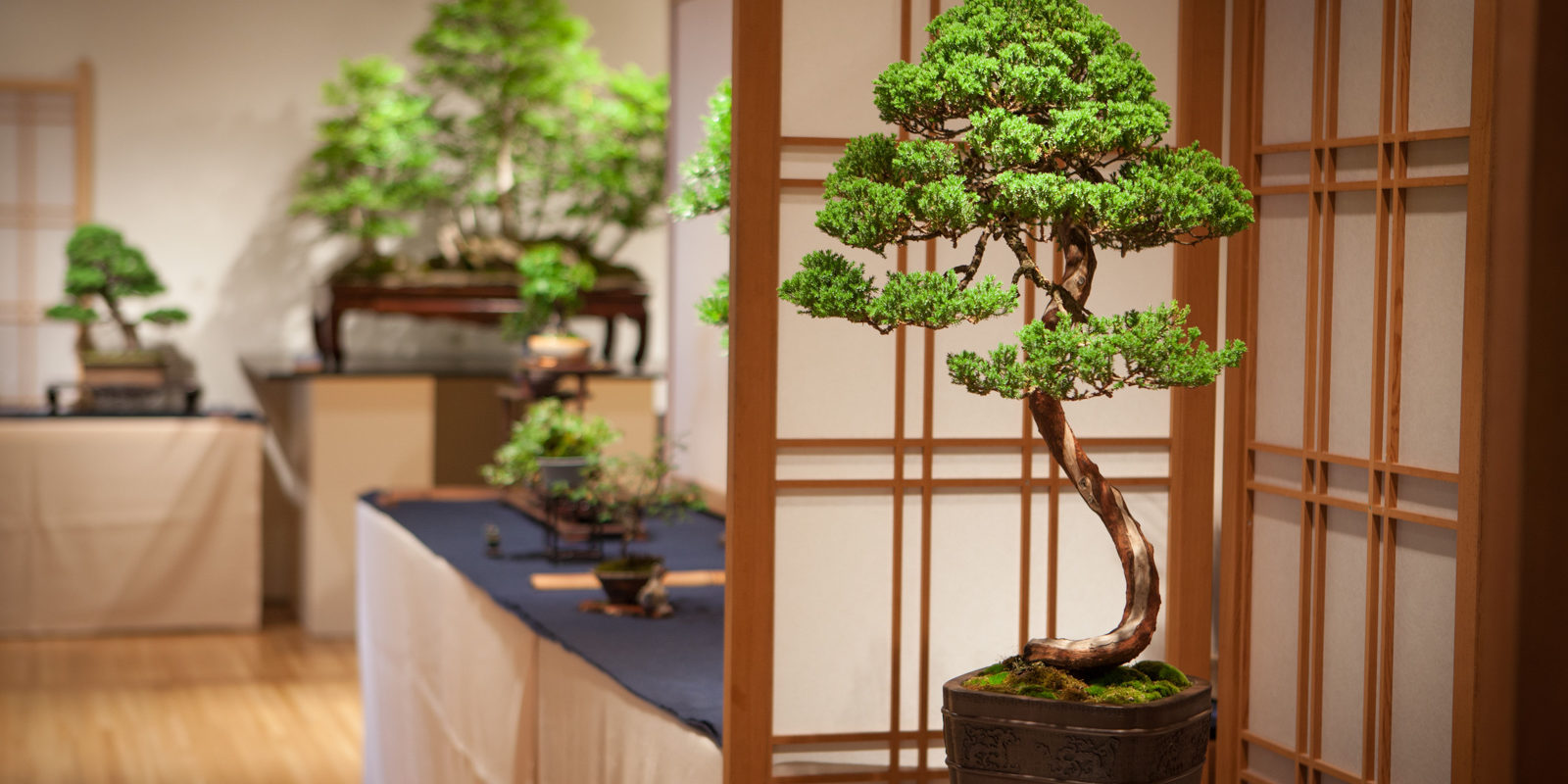 Bonsai 2015 - 2015-06-02 - 16491_0625942aa1d8491