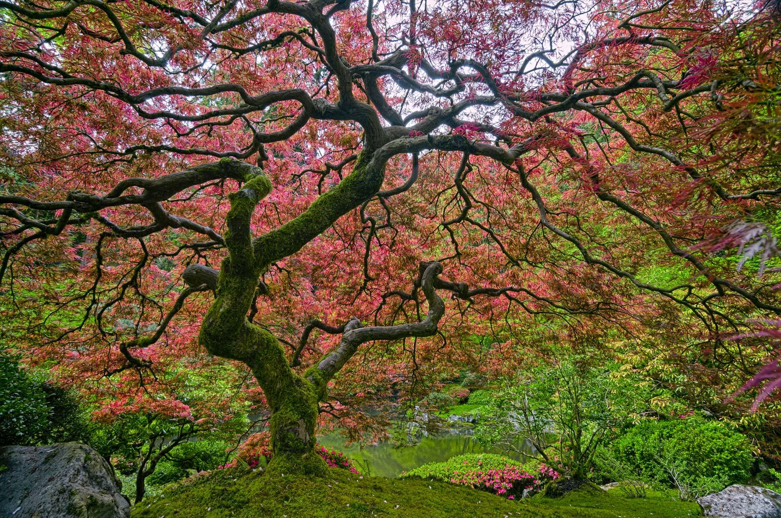 Arbor day portland japanese garden - Portland japanese garden free day ...