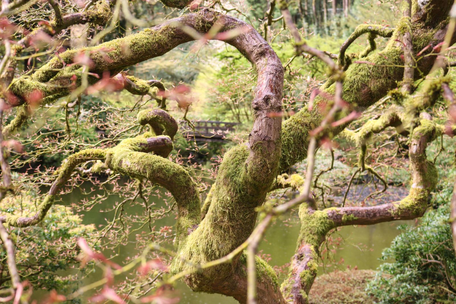 April in the Garden – Portland Japanese Garden