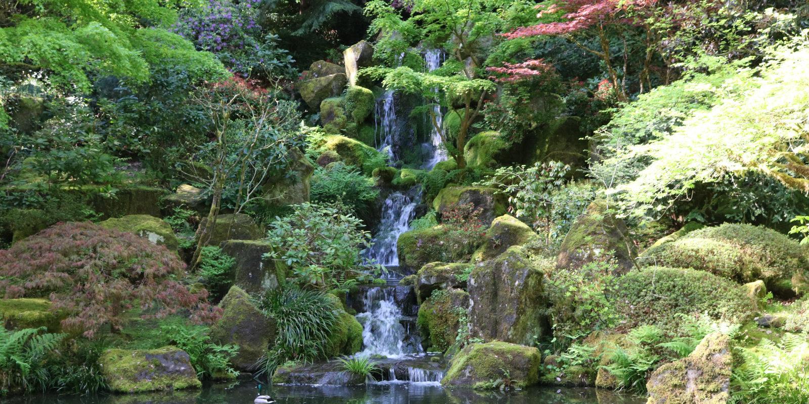 A Taste Of Summer Portland Japanese Garden