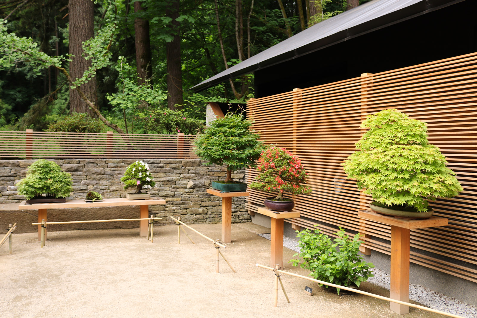 Ellie M. Hill Bonsai Terrace - Portland Japanese Garden