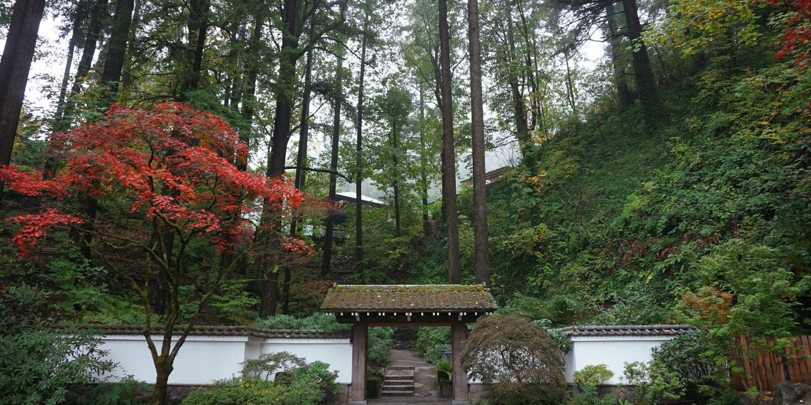 Fall Color Update October 23rd Portland Japanese Garden