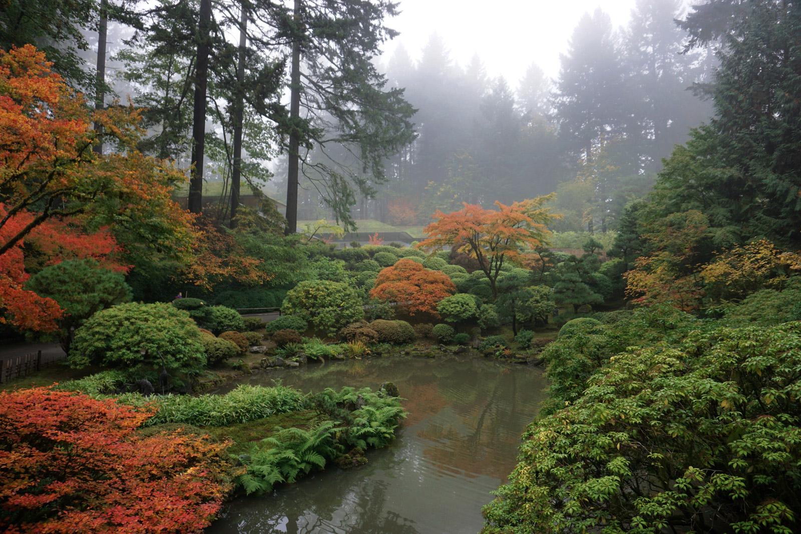 fall color update  october 23  2017  u2013 portland japanese garden