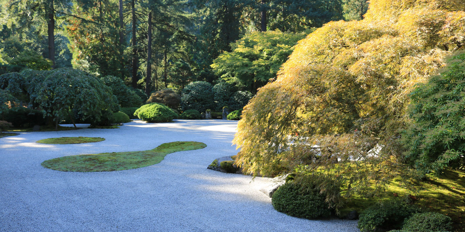 Fall Color Update October 16th Portland Japanese Garden