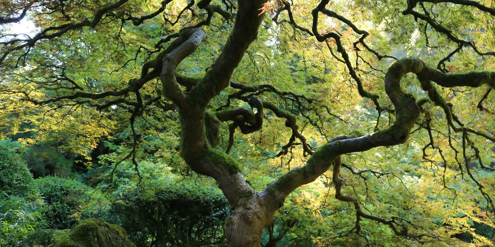LR_Portland Japanese Garden_Fall Colors 2017_ Julia Taylor_IMG_0968