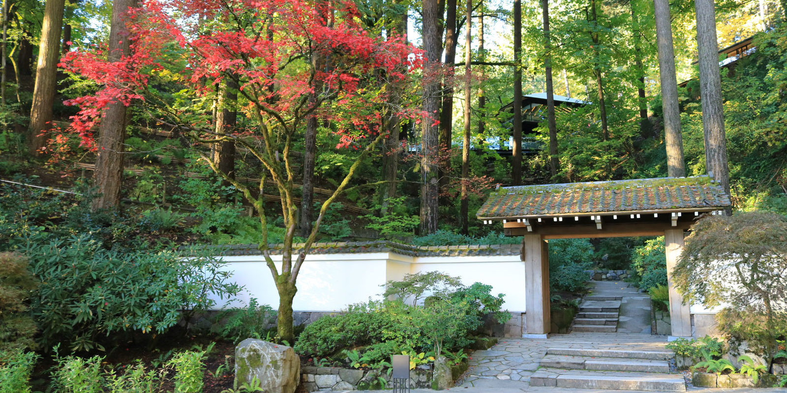Fall Color Update: October 26 – Portland Japanese Garden