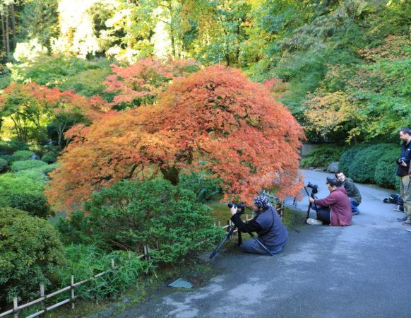 Portland Japanese Garden – Portland Japanese Garden