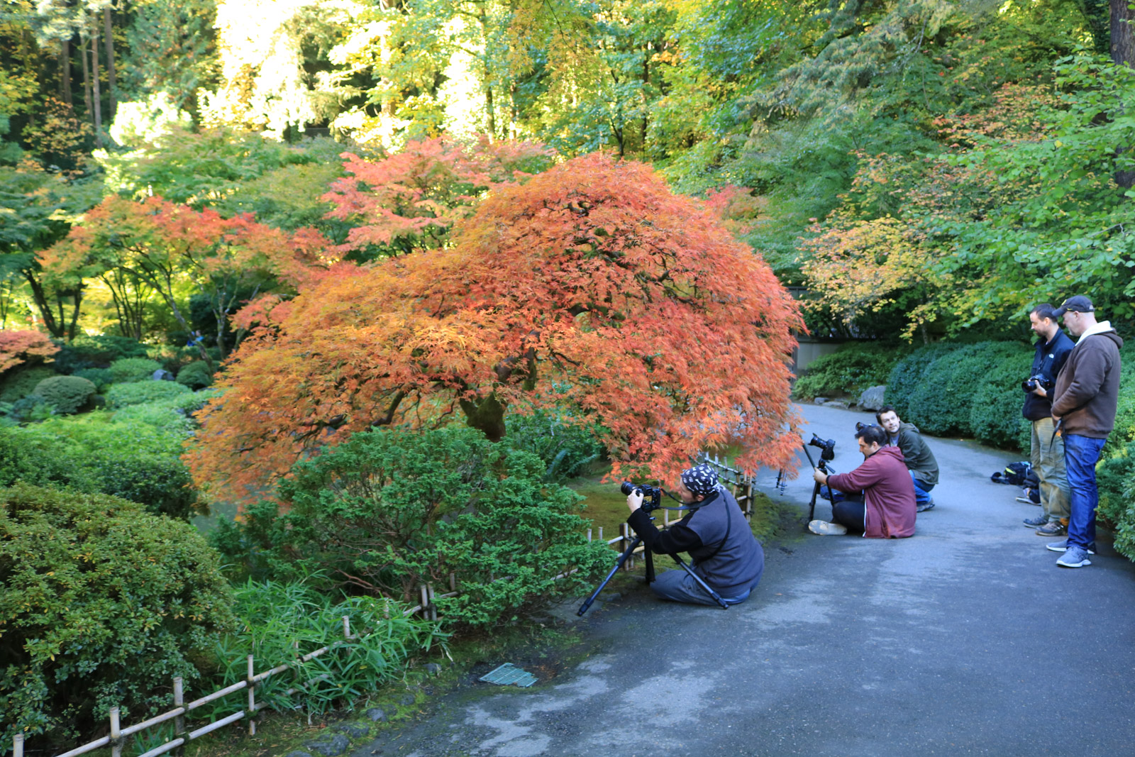 Photographer member hours portland japanese garden for Portland japanese garden admission