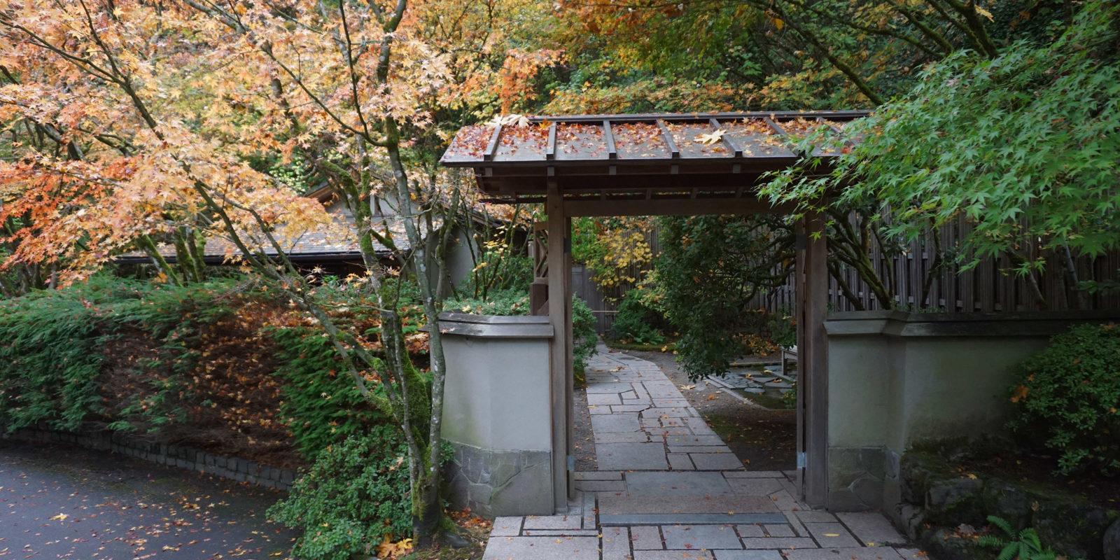 Fall Color Update November 3 Portland Japanese Garden