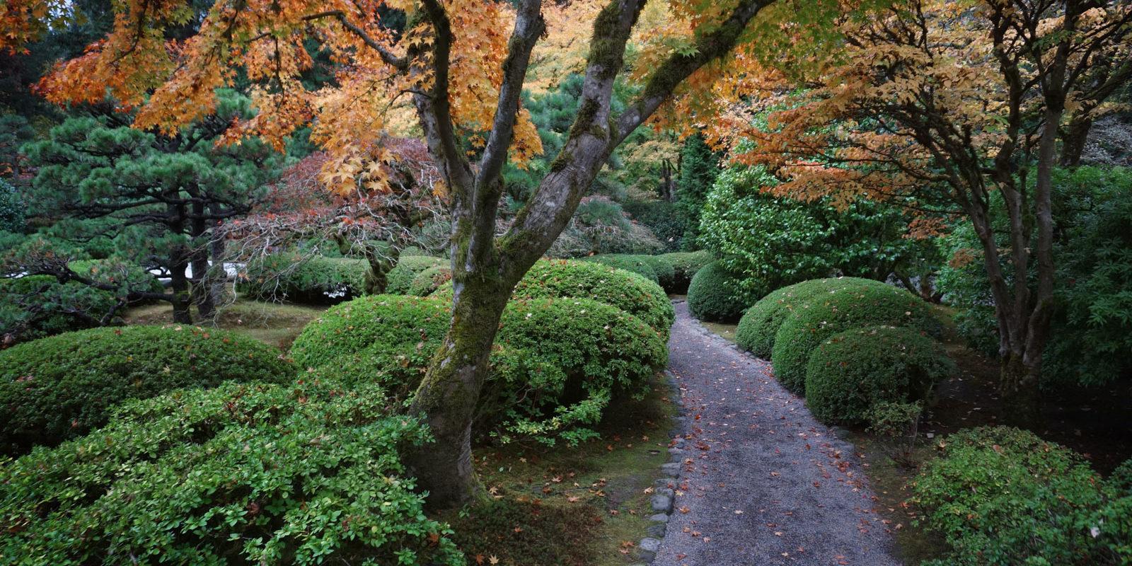 Fall color update november 3 portland japanese garden for Japanese garden colors