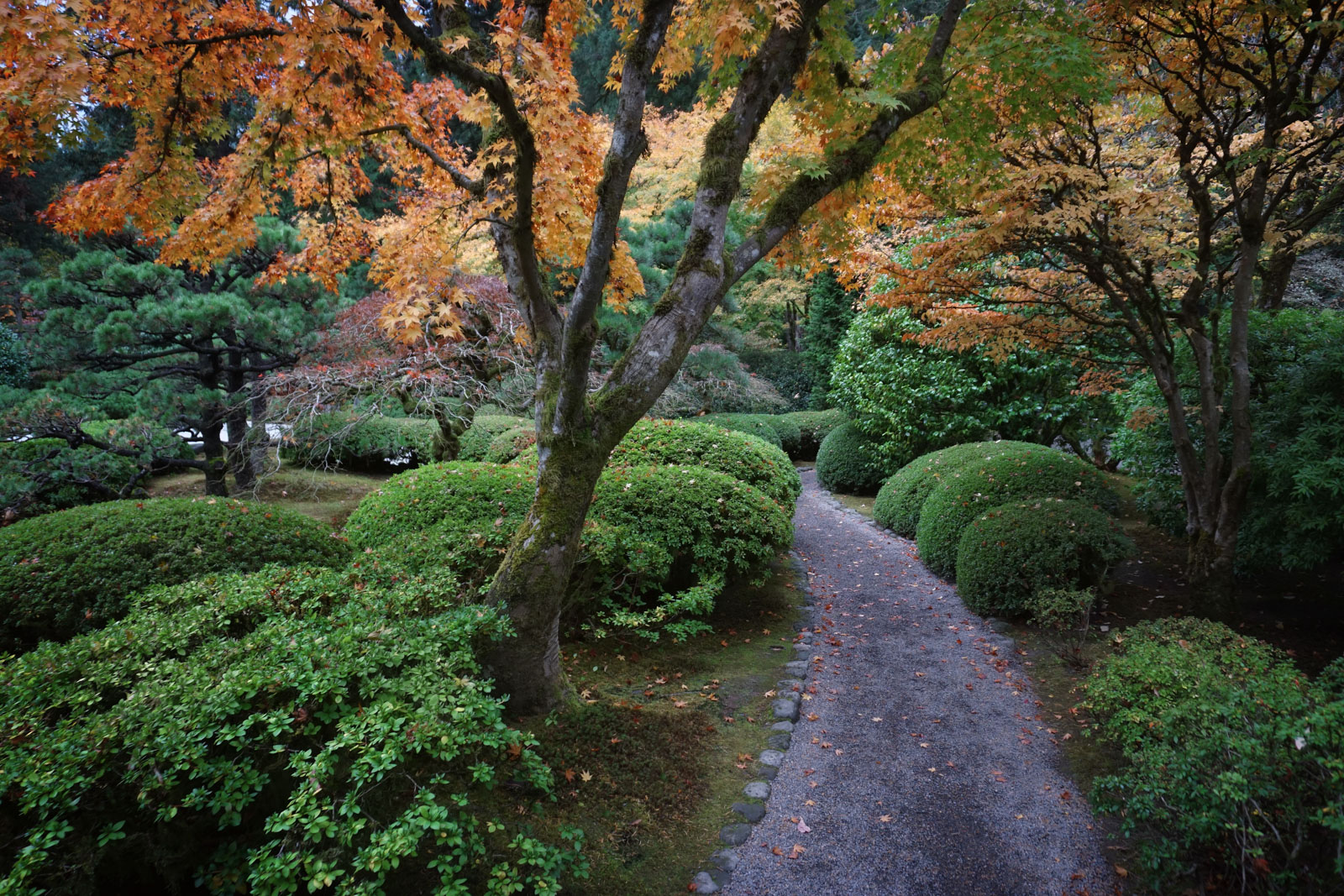 Thanksgiving day garden closed portland japanese garden - Portland japanese garden admission ...