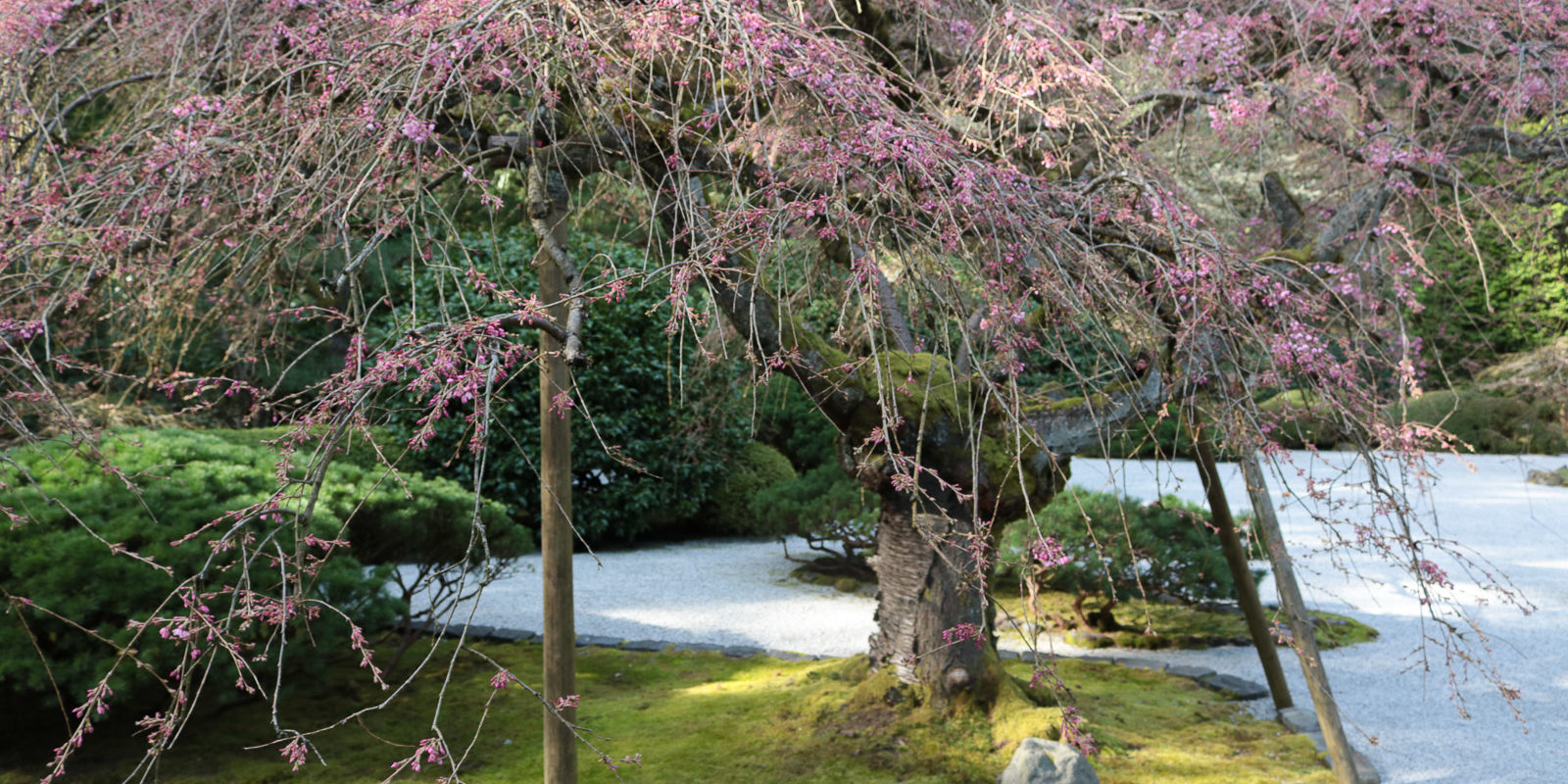 Julia Taylor_LR_Portland Japanese Garden_March 2018_IMG_3953