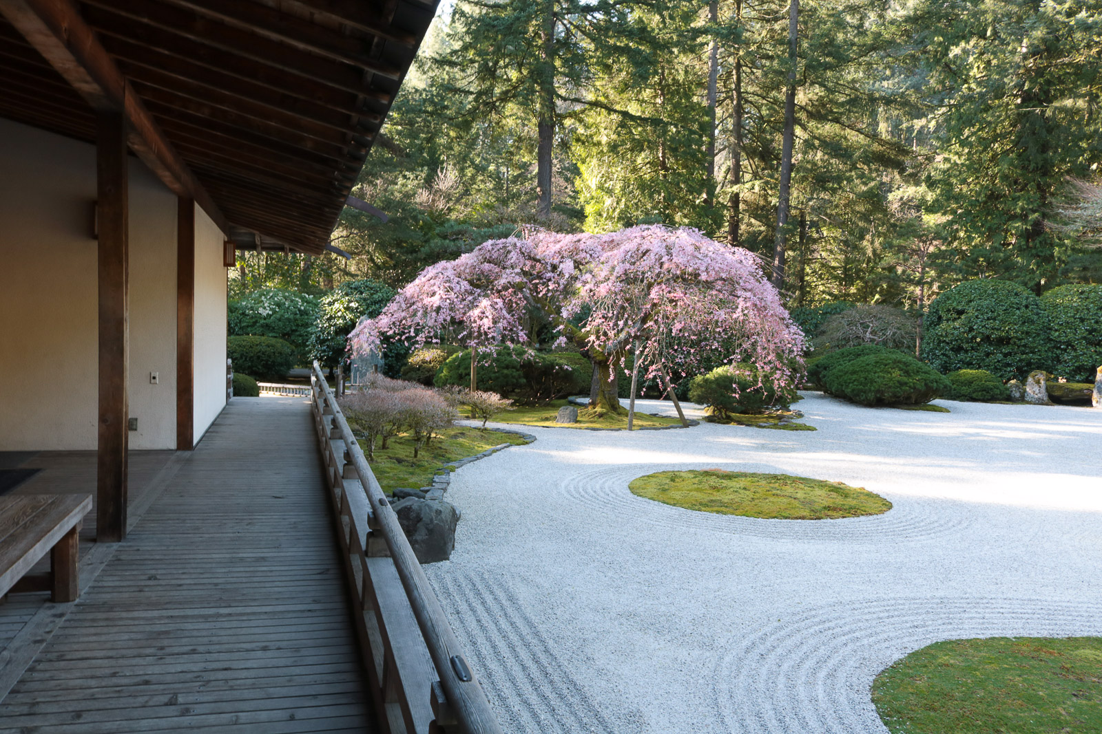 First day of spring portland japanese garden for Portland japanese garden admission