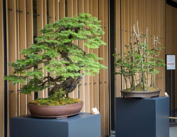 Bonsai trees outside the Learning Center