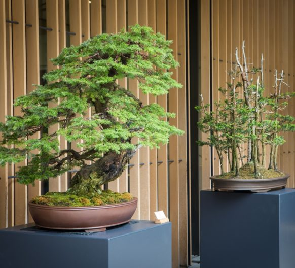 Bonsai trees outside the Learning Center