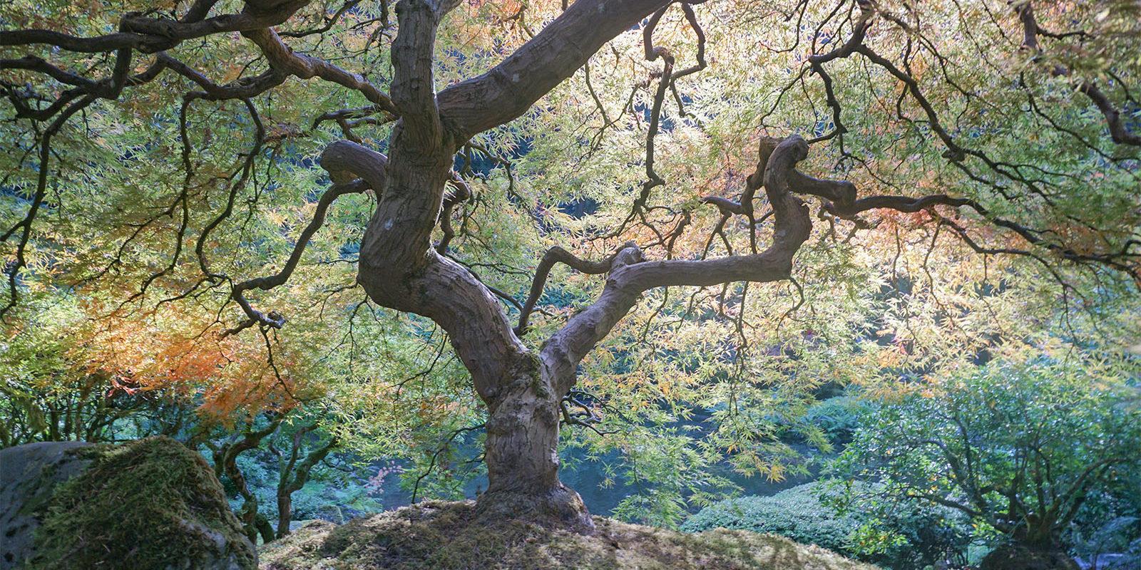October Fall Photos of Portland Japanese Garden - 2018-10-22 - DSC01025_low