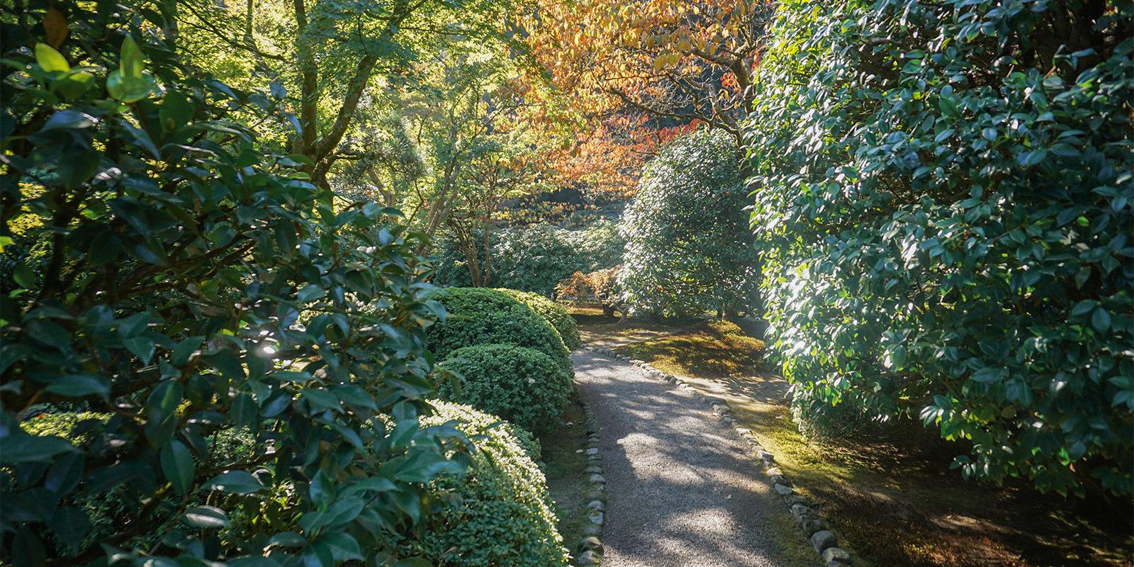 October Fall Photos of Portland Japanese Garden - 2018-10-22 - DSC01046_low