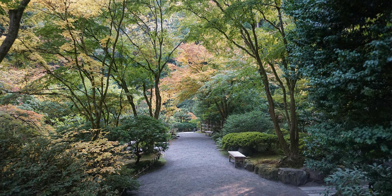 October Fall Photos of Portland Japanese Garden - 2018-10-22 - DSC01051_low