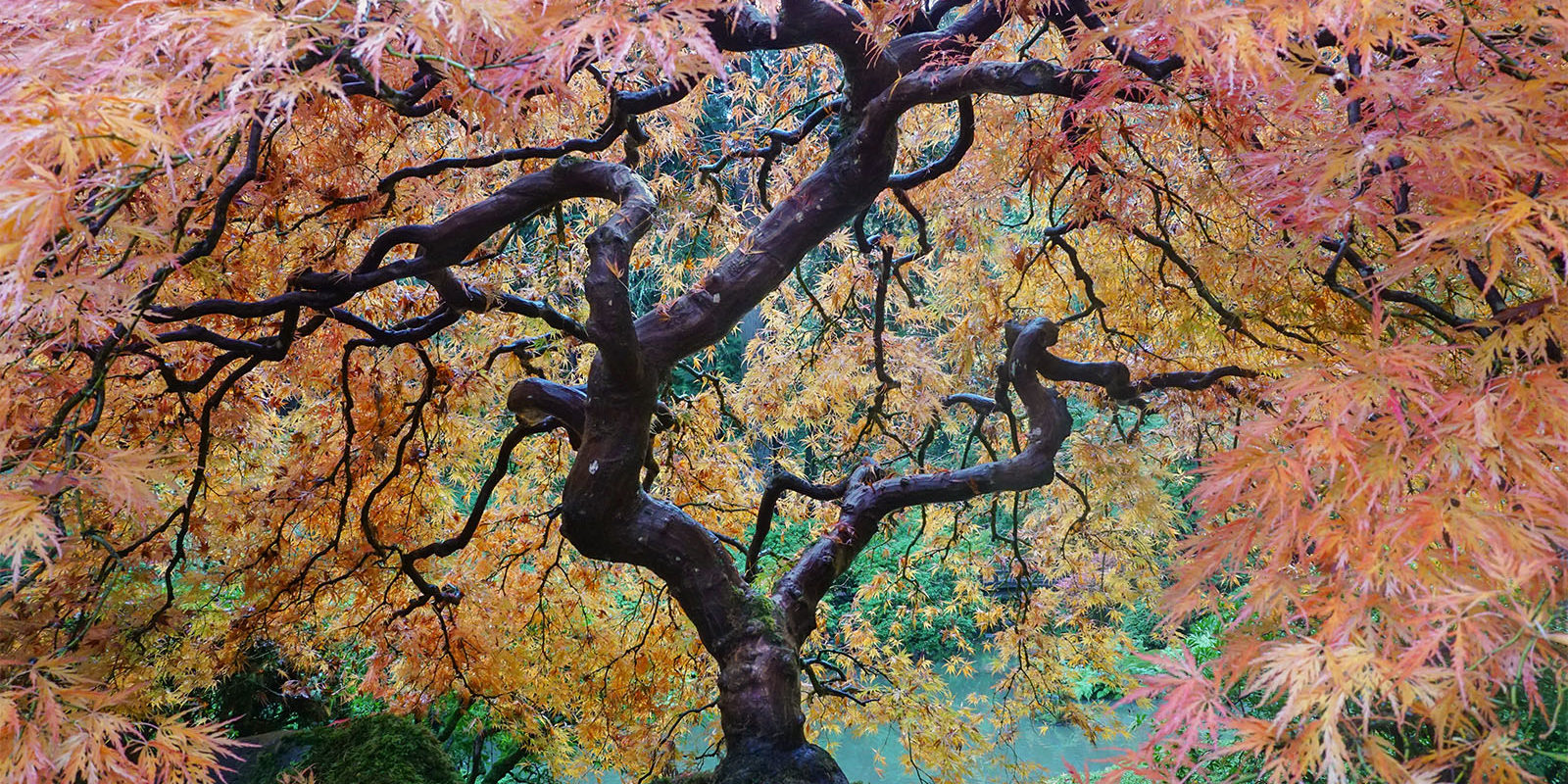 Peak Color Portland Japanese Garden. Photo by Tyler Quinn - 2018-10-29 - DSC01498_low