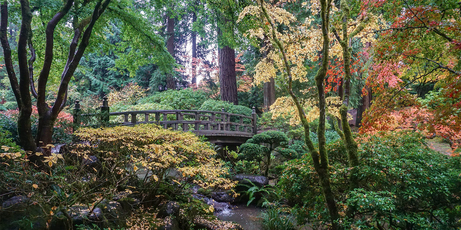 Peak Color Portland Japanese Garden. Photo by Tyler Quinn - 2018-10-29 - DSC01504_low