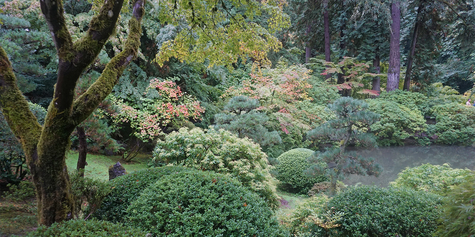 Portland Japanese Garden Early Fall Colors by Tyler Quinn - 2018-10-09 - DSC00903_low