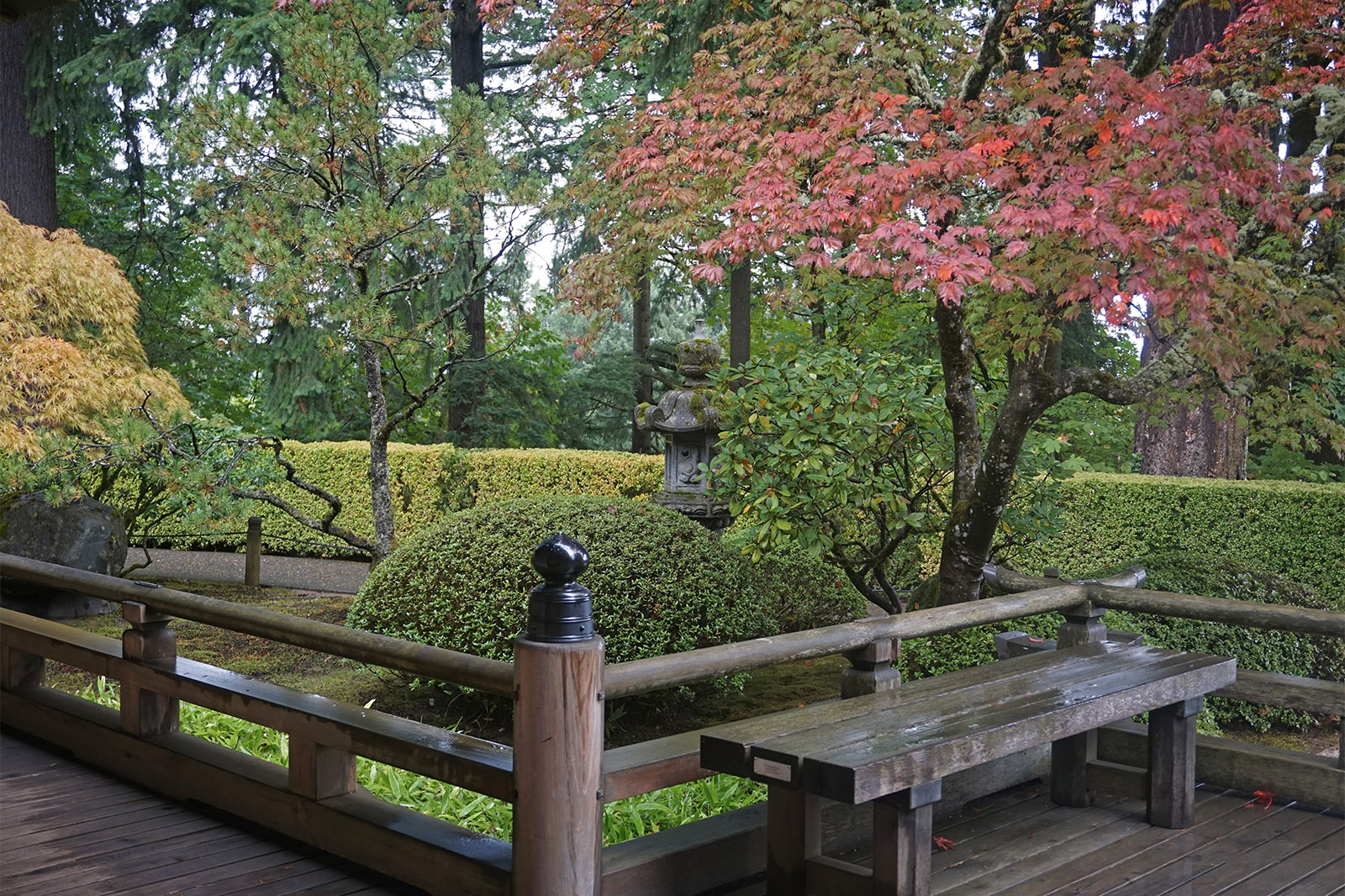 Fall color update october 9 2018 portland japanese garden - Portland japanese garden free day ...