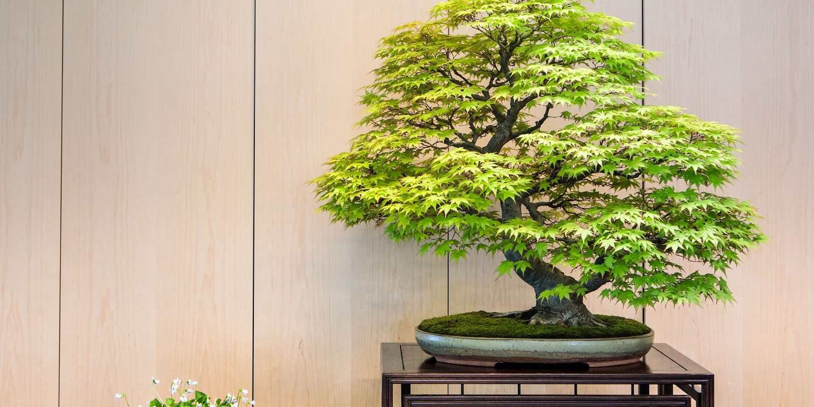 Bonsai exhibition 2018