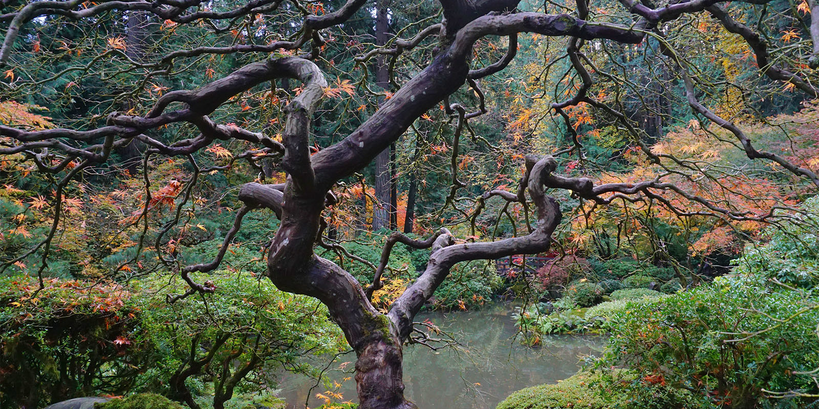 Early November Portland Japanese Garden Photos by Tyler Quinn - 2018-11-02 - DSC01575_low