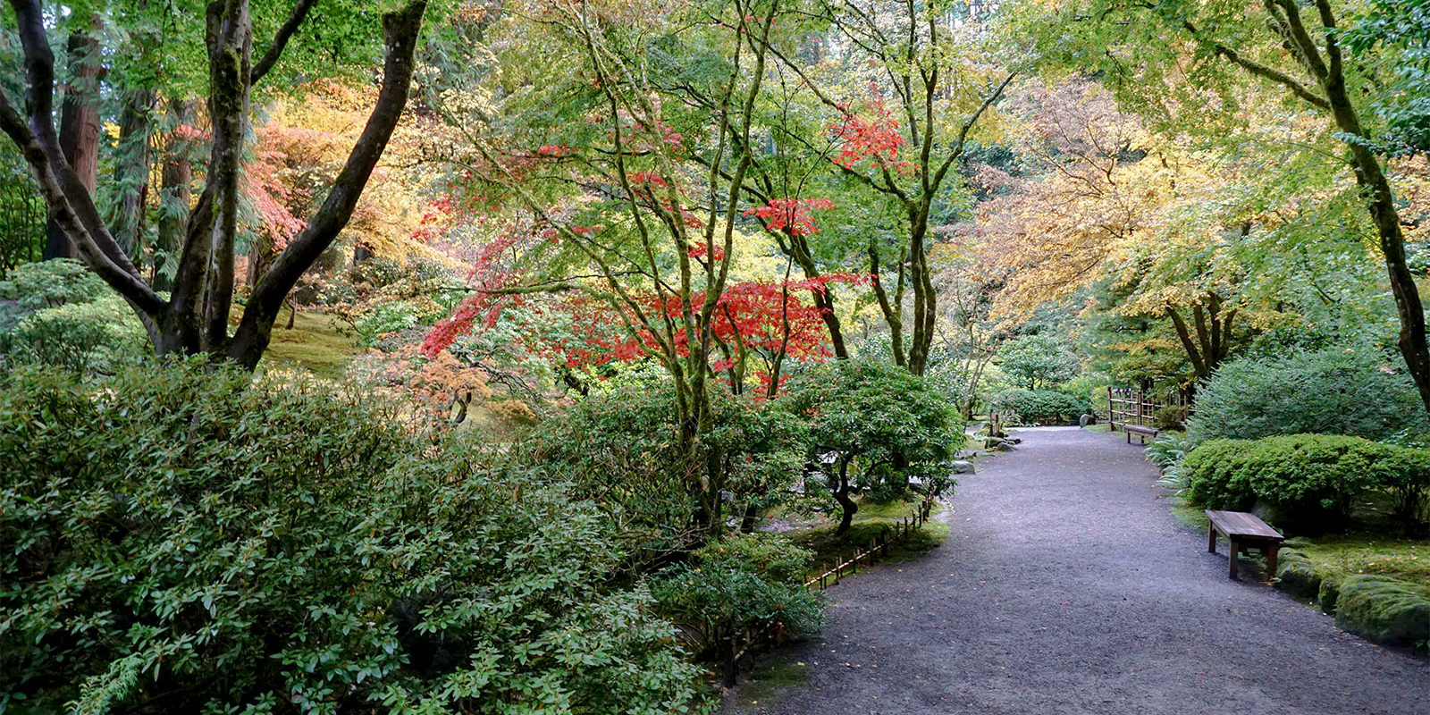 Early November Portland Japanese Garden Photos by Tyler Quinn - 2018-11-02 - DSC01580_low