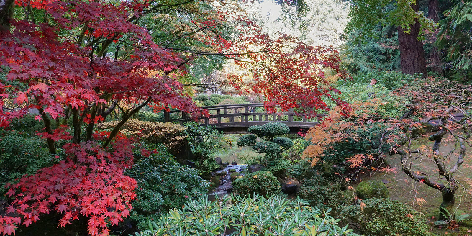 Early November Portland Japanese Garden Photos by Tyler Quinn - 2018-11-02 - DSC01584_low