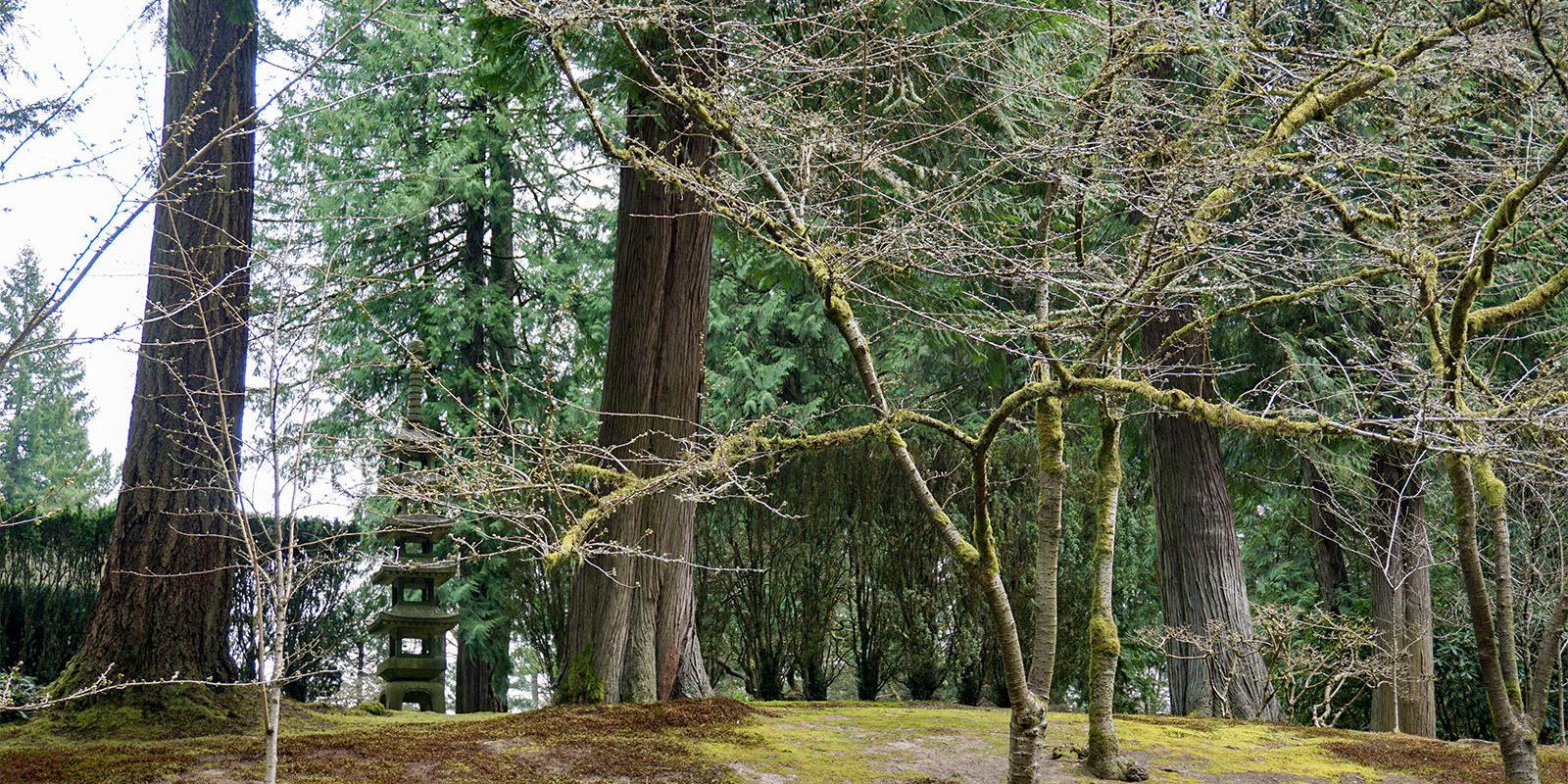 Portland Japanese Garden -Cherry Blossom Spring Watch - 3.21 - DSC02410