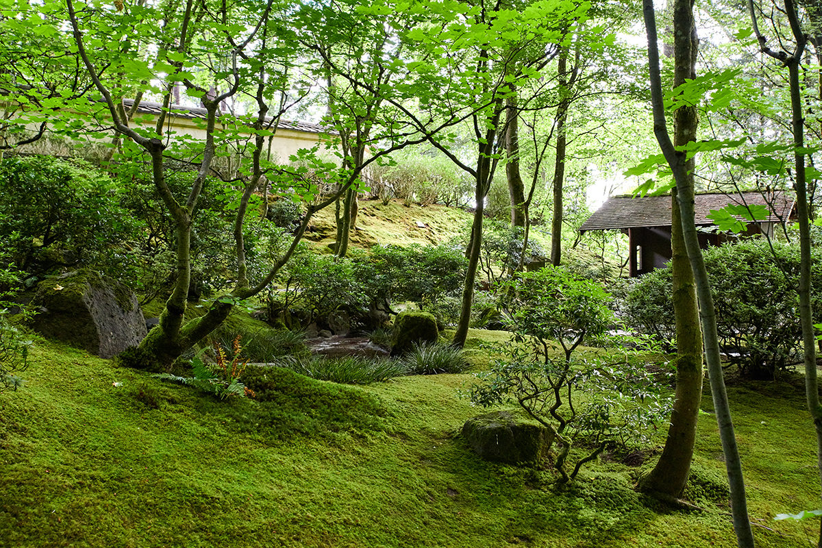 DinaAvila_Japanese_Garden_DSC5636_ Web size