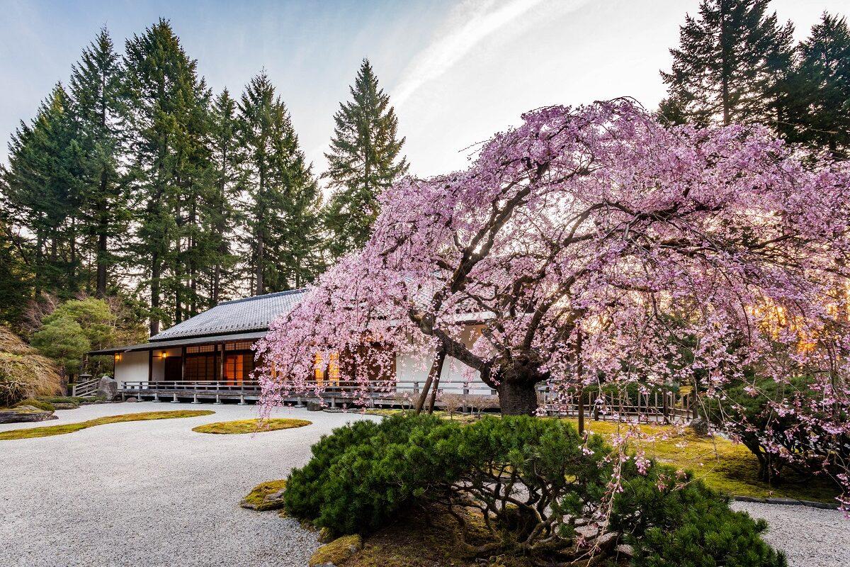 Cherry Tree-2014-03-24-Jonathan Ley-13x19_Resize