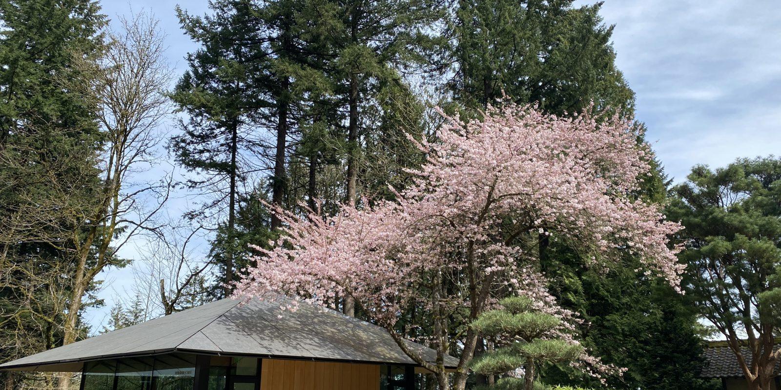 Photo Apr 02, 2 19 52 PM