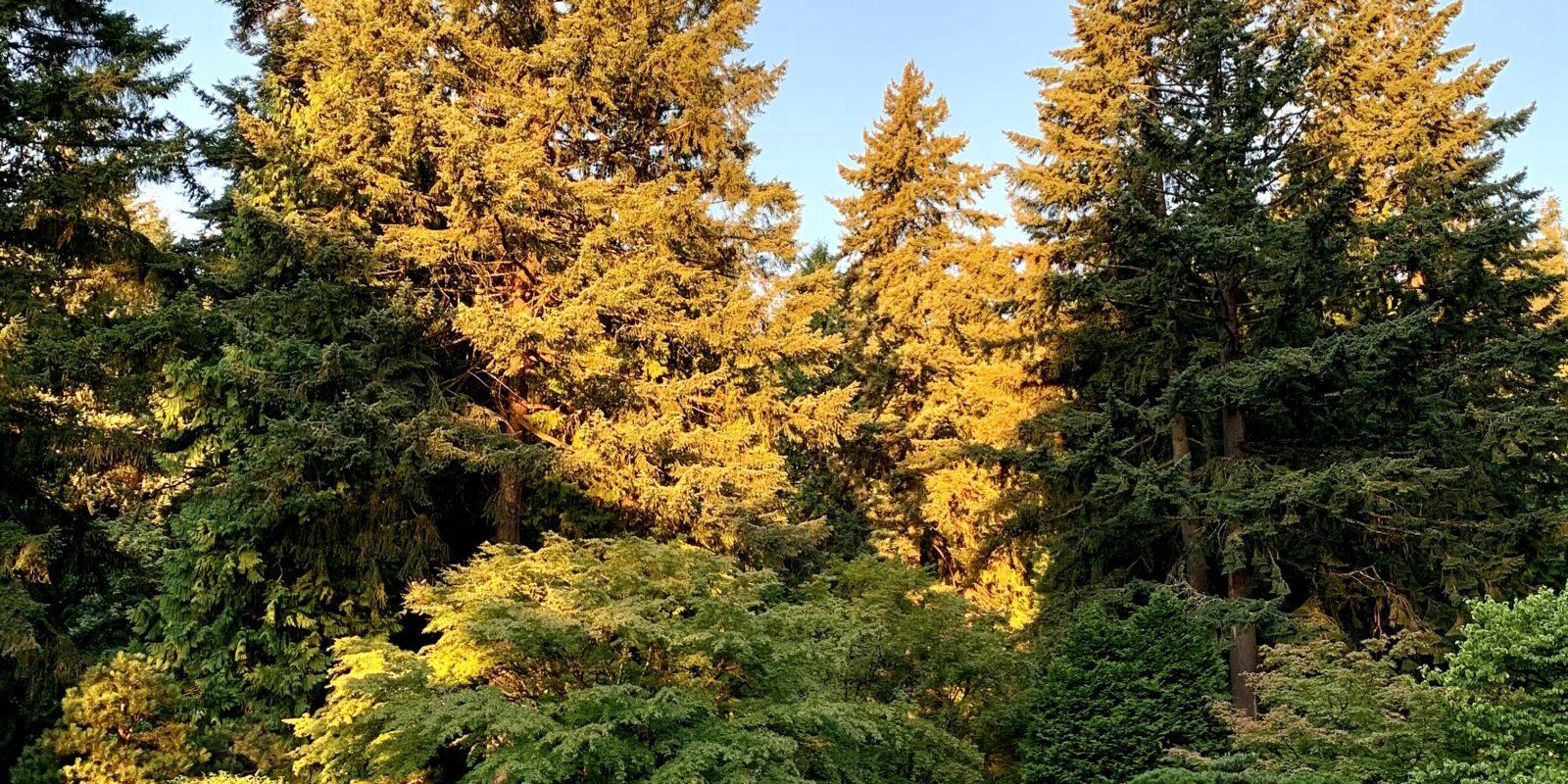 dawn at flat garden in summer at portland japanese garden